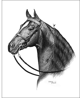 Tennessee Walking Horse Walker stallion custom horse portraits from photographs pencil art drawings