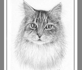 Pet cat art paintings prints for sale by artist