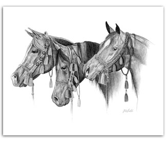 Arabian horses in native halters equine art Rohde drawing