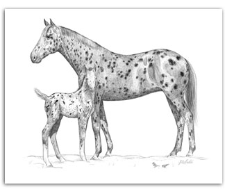 Appaloosa horses mare foal equine art in Winter