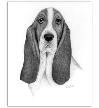 Basset Hound dog art drawings prints